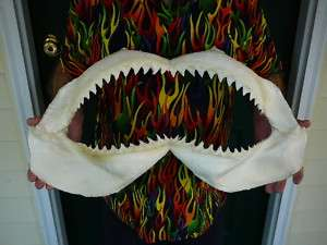 24 1/2 BULL SHARK jaw sharks jaws teeth taxidermy science Nice sj30