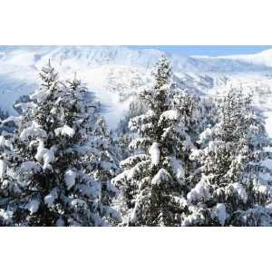 Montagne Pin Sapin Neige   Peel and Stick Wall Decal by
