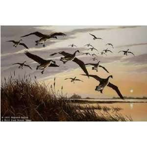 Maynard Reece   Sunset Canada Geese: Home & Kitchen