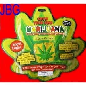 Grow Your Own Marijuana Novelty Toy: Toys & Games