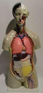 11PC LIFESIZE HUMAN ANATOMY TORSO MANNEQUIN 34 (301 15