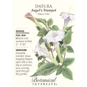 Datura Angels Trumpet Seeds   .20 grams Patio, Lawn