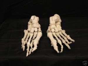 Bucky Skeleton Feet Life Size Halloween Prop, NEW