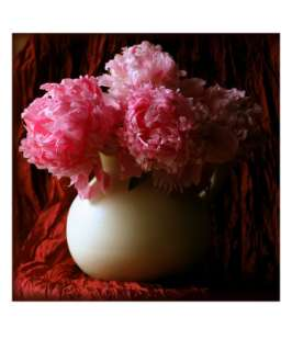 Burgundy Peony Giclee Print by Anna Miller at Art