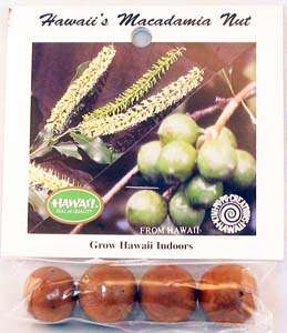 how to grow macadamia nut trees from seed